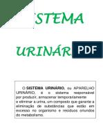 Sistema Urinário