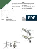 Hernia Hydrocele (2)