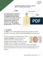 Unit 6 the Nervous System