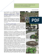 AgriculturaSintropicaMozambique ESP