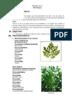 botanica.doc
