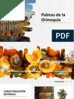 Palmas de La Orinoquia