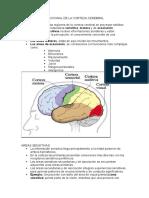 Organizacion Sistema nervioso