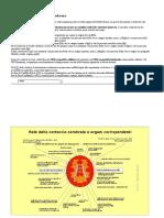 Tabella di consultazione ectoderma.docx