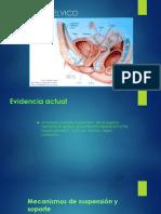 Anatomia Piso Pelvico