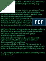 PRUEBA FISIOLOGIA.docx