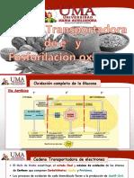 Cadena Transportadora de E- y Fosforilación Oxidativa