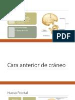 Anatomía de cráneo.pptx