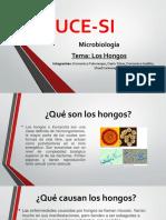 Hongos Micro