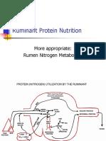Proteins - Ruminants