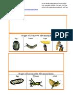 Science Metamorphosis Stages booklets