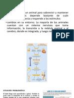 2. La Neurona y el Flujo de Información 1.pptx