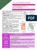 BIOLOGÍA CELULAR PRIMER PARCIAL 1.docx