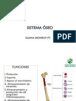 morfologia osea
