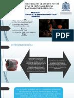 Micología; Morfología de Los Hongos Presentes en Los Alimentos