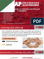 Biomecanica de La Cintura Escapular y Hombro
