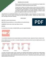 DESARROLLO-DE-LA-OCLUSION.docx