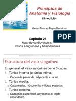 21 VASOS SANGUI Y HEMODINAMIA.pptx