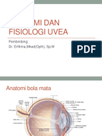 anatomi dan fisiologi uvea