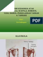 Anatomi Kerangka Atas (Klavikula, Scapula,