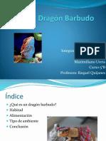 El Dragón Barbudo