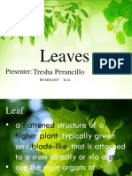 Leaves (Chapter 6)