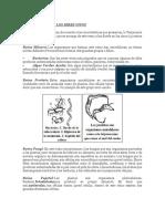 Lectura y taller de clasisficacion de los seres vivos.docx