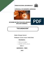 fecundacion biologia