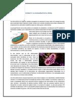 Mitocondria_Equipo_Fátima Samantha García Alcázar (1).docx