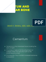 2. Cementum and Alv Bone 2