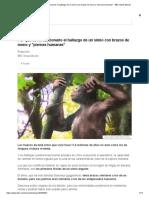 Por Qué Es Revolucionario El Hallazgo de Un Simio Con Brazos de Mono y _piernas Humanas_ - BBC News Mundo