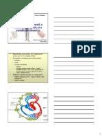 Anatomia Sistemului limfatic 2008 mic.pdf