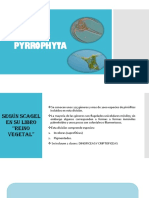 División Pirrofita