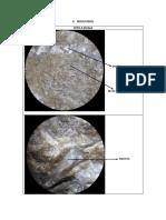 Laboratorio rocas carbonatadas-Petrografia sedimentaria