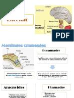 neuro anatomia.pptx