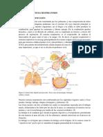 Sistema Respiratorio.docx