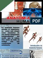 ANATOMIA MODIFICADOoO.pptx