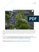 PLANTAS BRIÓFITAS_ Ejemplos y Características