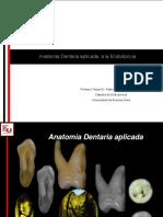 Anatomia dentaria aplicada a la endodoncia AULA.pdf