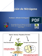 Asimilacion-Nitrogeno 2019.ppt