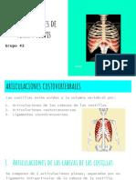 articulaciones de tórax y pelvis.pdf