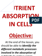 Nutrient Absorption in Cells