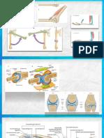 ¿Como Estudiar Articulaciones_ (Artrología)