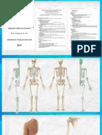 ¿Como Estudiar Huesos_ (Osteología)