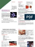 Infecciones Por Streptococcus
