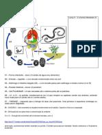 40a3 - Ascaris Lumbricoides - Ciclo