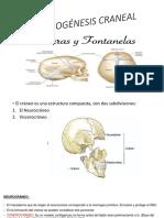 osteogenesis craneal