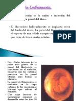 implantacion-embrionaria-7-s (1)