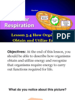 Lesson 5.4 How Organisms Obtain and Utilize Energy.pptx
