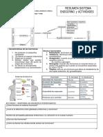 TALLER SISTEMA ENDOCRINO-convertido.docx